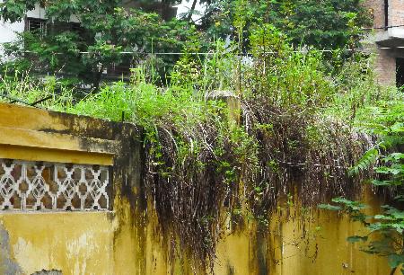 Bể nước cung cấp cho các tòa nhà cỏ mọc um tùm (Ảnh: Ngọc Cương)